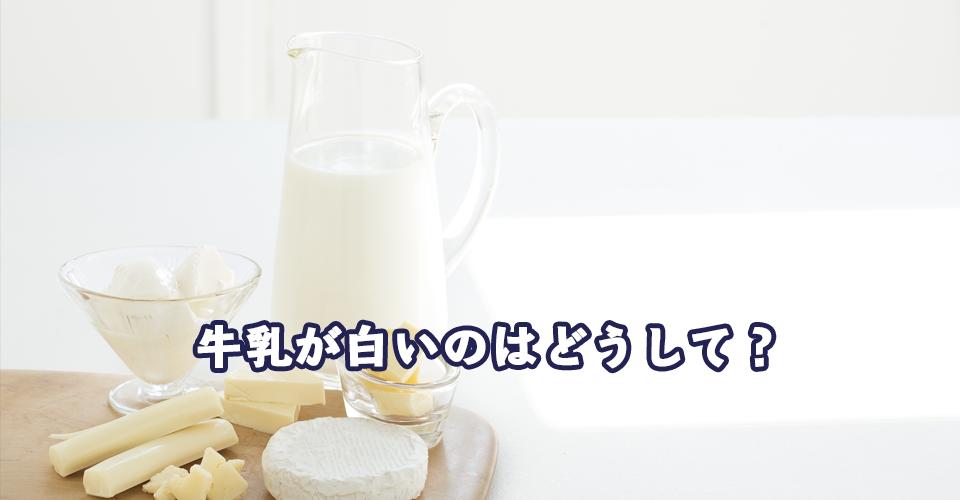牛乳が白いのはどうして?