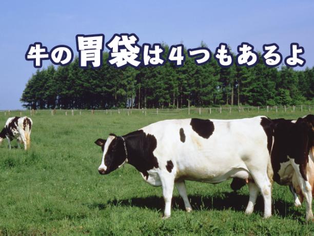 牛の胃袋は4つもあるよ